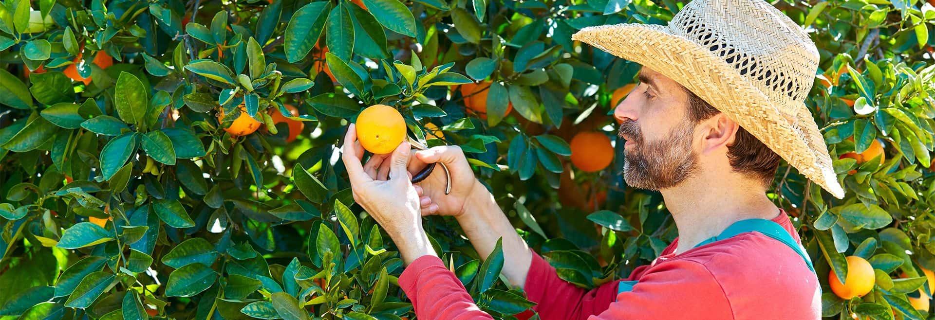 Farmer oranger