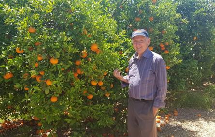 Producteur oranges banagrumes