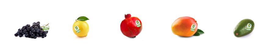 Bandeau fruits